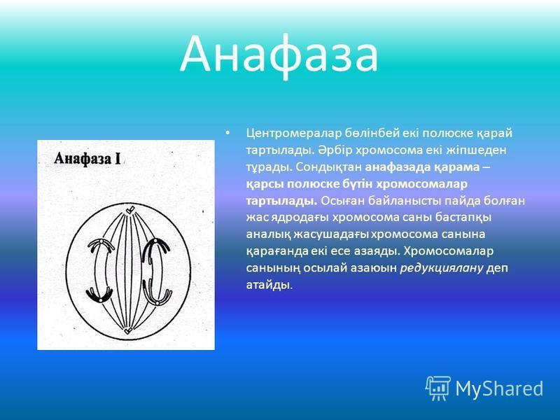 Анафаза Центромералар бөлінбей екі полюске қарай тартылады. Әрбір хромосома екі жіпшеден тұрады. Сондықтан анафазада қарама – қарсы полюске бүтін хромосомалар тартылады. Осыған байланысты пайда болған жас ядродағы хромосома саны бастапқы аналық жасуш