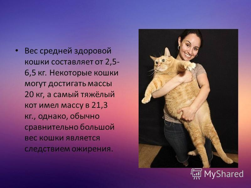 Вес средней здоровой кошки составляет от 2,5- 6,5 кг. Некоторые кошки могут достигать массы 20 кг, а самый тяжёлый кот имел массу в 21,3 кг., однако, обычно сравнительно большой вес кошки является следствием ожирения.