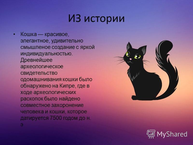 ИЗ истории Кошка красивое, элегантное, удивительно смышленое создание с яркой индивидуальностью. Древнейшее археологическое свидетельство одомашнивания кошки было обнаружено на Кипре, где в ходе археологических раскопок было найдено совместное захоро