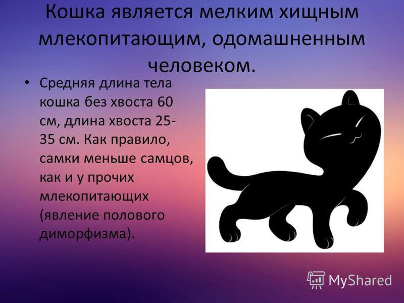 Кошка является мелким хищным млекопитающим, одомашненным человеком. Средняя длина тела кошка без хвоста 60 см, длина хвоста 25- 35 см. Как правило, самки меньше самцов, как и у прочих млекопитающих (явление полового диморфизма).