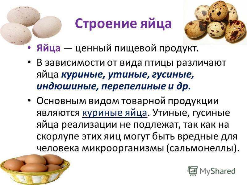 Строение яйца Яйца ценный пищевой продукт. В зависимости от вида птицы различают яйца куриные, утиные, гусиные, индюшиные, перепелиные и др. Основным видом товарной продукции являются куриные яйца. Утиные, гусиные яйца реализации не подлежат, так как