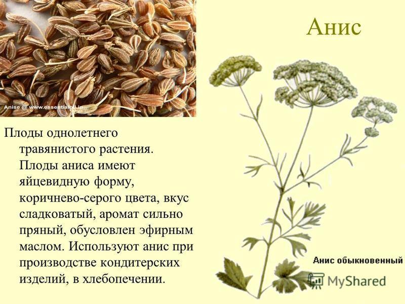 Анис Плоды однолетнего травянистого растения. Плоды аниса имеют яйцевидную форму, коричнево-серого цвета, вкус сладковатый, аромат сильно пряный, обусловлен эфирным маслом. Используют анис при производстве кондитерских изделий, в хлебопечении.