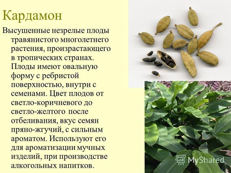 Кардамон Высушенные незрелые плоды травянистого многолетнего растения, произрастающего в тропических странах. Плоды имеют овальную форму с ребристой поверхностью, внутри с семенами. Цвет плодов от светло-коричневого до светло-желтого после отбеливан