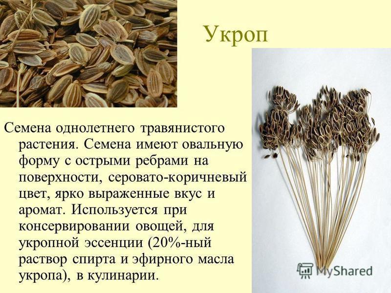 Укроп Семена однолетнего травянистого растения. Семена имеют овальную форму с острыми ребрами на поверхности, серовато-коричневый цвет, ярко выраженные вкус и аромат. Используется при консервировании овощей, для укропной эссенции (20%-ный раствор спи