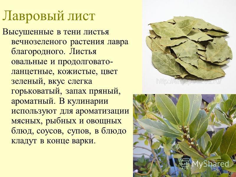 Лавровый лист Высушенные в тени листья вечнозеленого растения лавра благородного. Листья овальные и продолговато- ланцетные, кожистые, цвет зеленый, вкус слегка горьковатый, запах пряный, ароматный. В кулинарии используют для ароматизации мясных, рыб