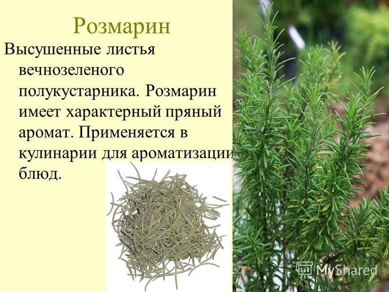 Розмарин Высушенные листья вечнозеленого полукустарника. Розмарин имеет характерный пряный аромат. Применяется в кулинарии для ароматизации блюд.