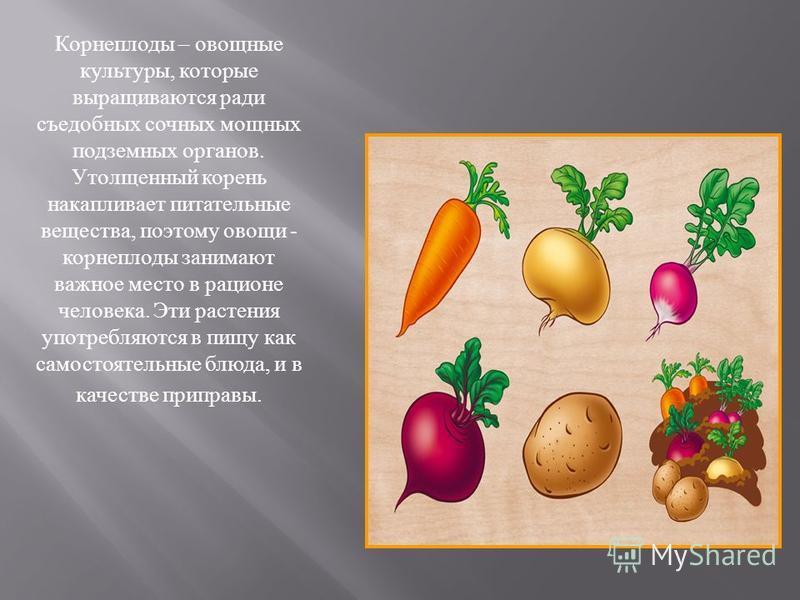 Корнеплоды – овощные культуры, которые выращиваются ради съедобных сочных мощных подземных органов. Утолщенный корень накапливает питательные вещества, поэтому овощи - корнеплоды занимают важное место в рационе человека. Эти растения употребляются в