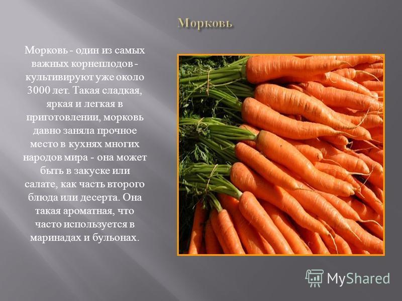 Mорковь - один из самых важных корнеплодов - культивируют уже около 3000 лет. Такая сладкая, яркая и легкая в приготовлении, морковь давно заняла прочное место в кухнях многих народов мира - она может быть в закуске или салате, как часть второго блюд