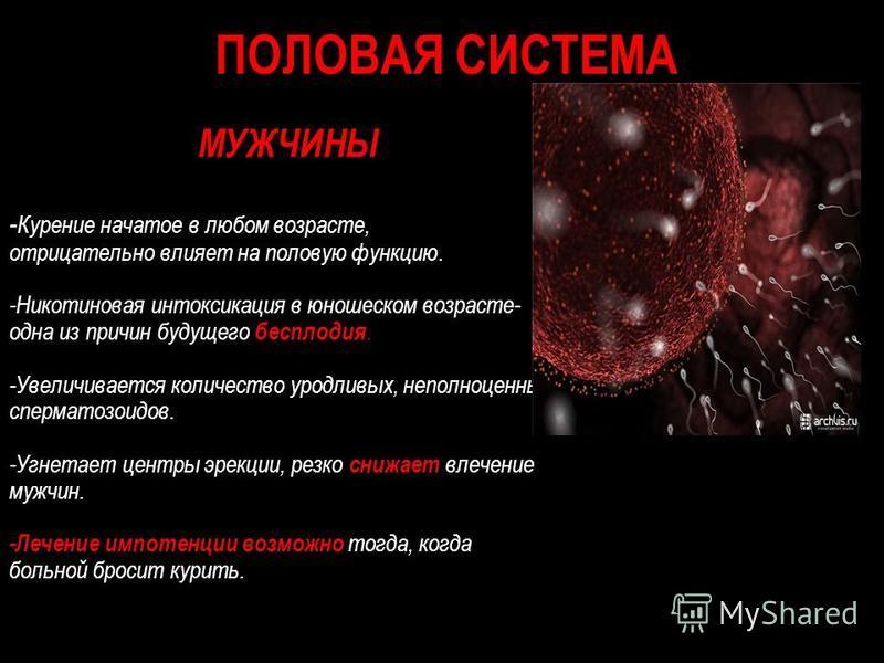 ПОЛОВАЯ СИСТЕМА МУЖЧИНЫ - Курение начатое в любом возрасте, отрицательно влияет на половую функцию. -Никотиновая интоксикация в юношеском возрасте- одна из причин будущего бесплодия. -Увеличивается количество уродливых, неполноценных сперматозоидов.