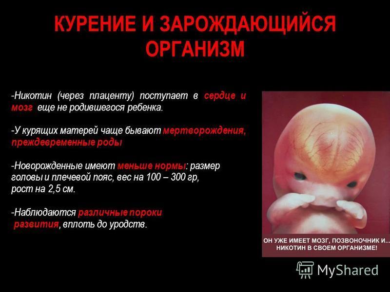 КУРЕНИЕ И ЗАРОЖДАЮЩИЙСЯ ОРГАНИЗМ - Никотин (через плаценту) поступает в сердце и мозг еще не родившегося ребенка. - У курящих матерей чаще бывают мертворождения, преждевременные роды. - Новорожденные имеют меньше нормы : размер головы и плечевой пояс