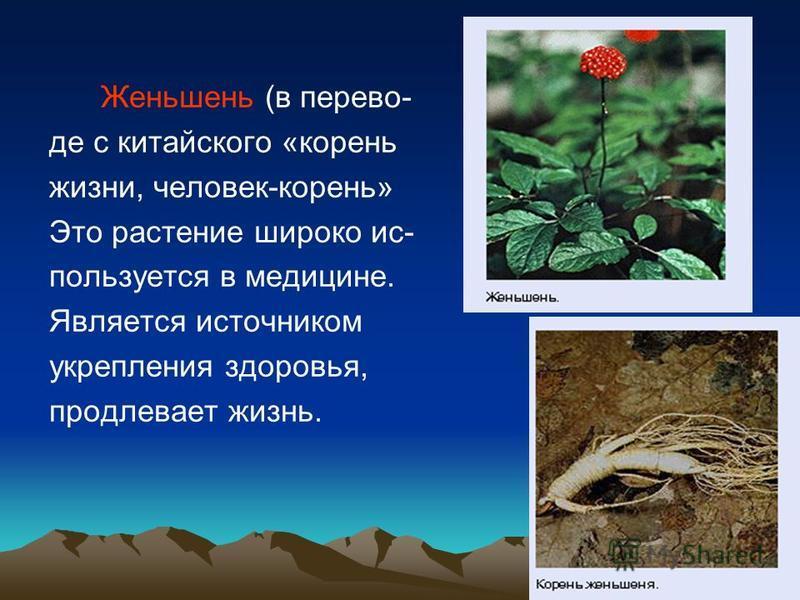 Женьшень (в переводе с китайского «корень жизни, человек-корень» Это растение широко ис- пользуется в медицине. Является источником укрепления здоровья, продлевает жизнь.