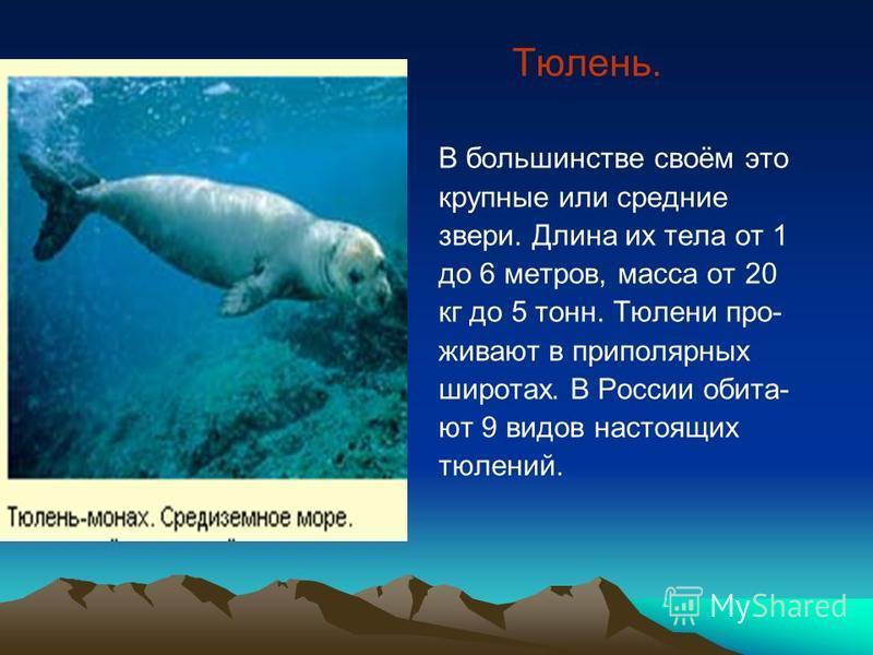 Тюлень. В большинстве своём это крупные или средние звери. Длина их тела от 1 до 6 метров, масса от 20 кг до 5 тонн. Тюлени проживают в приполярных широтах. В России обита- ют 9 видов настоящих тюлений.