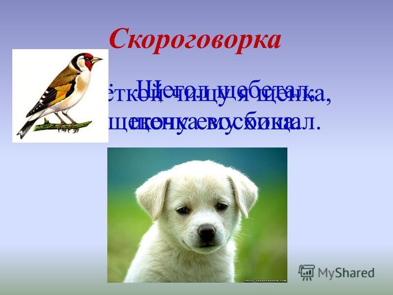 Скороговорка Щёткой чищу я щенка, щекочу ему бока. Щегол щебетал, щенка восхищал.