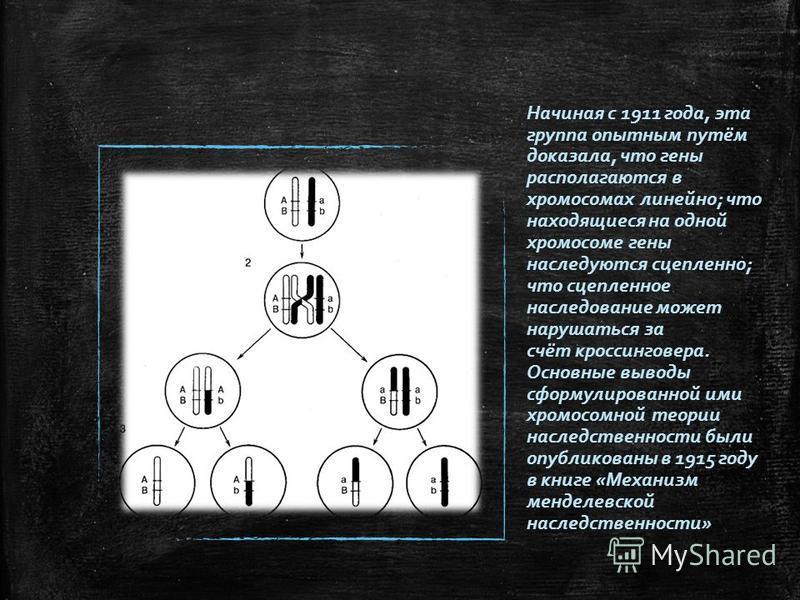 Начиная с 1911 года, эта группа опытным путём доказала, что гены располагаются в хромосомах линейно; что находящиеся на одной хромосоме гены наследуются сцепленно; что сцепленное наследование может нарушаться за счёт кроссинговера. Основные выводы сф