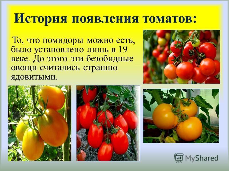 История появления томатов: То, что помидоры можно есть, было установлено лишь в 19 веке. До этого эти безобидные овощи считались страшно ядовитыми.