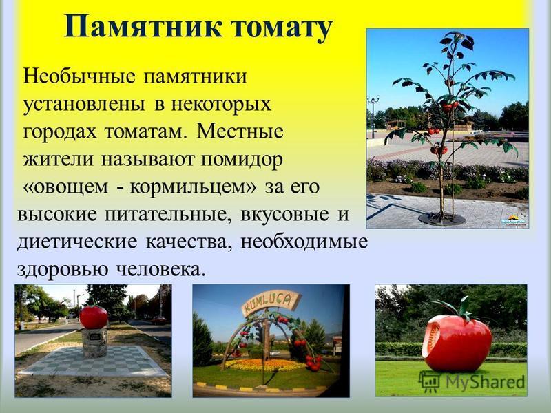 Памятник томату Необычные памятники установлены в некоторых городах томатам. Местные жители называют помидор «овощем - кормильцем» за его высокие питательные, вкусовые и диетические качества, необходимые здоровью человека.
