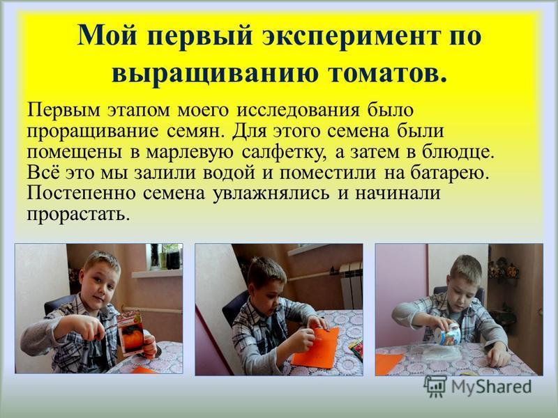 Мой первый эксперимент по выращиванию томатов. Первым этапом моего исследования было проращивание семян. Для этого семена были помещены в марлевую салфетку, а затем в блюдце. Всё это мы залили водой и поместили на батарею. Постепенно семена увлажняли