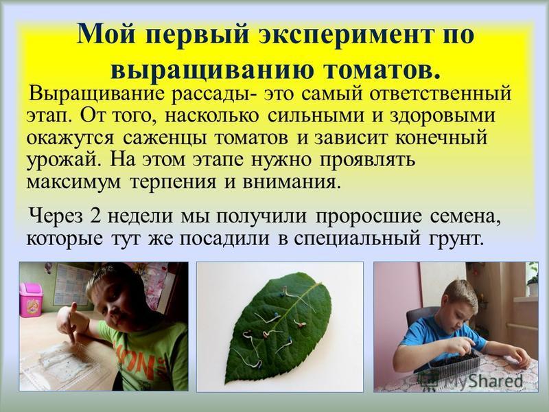 Мой первый эксперимент по выращиванию томатов. Выращивание рассады- это самый ответственный этап. От того, насколько сильными и здоровыми окажутся саженцы томатов и зависит конечный урожай. На этом этапе нужно проявлять максимум терпения и внимания.