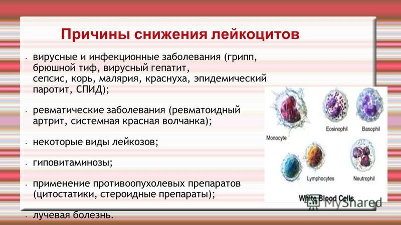 Причины снижения лейкоцитов вирусные и инфекционные заболевания (грипп, брюшной тиф, вирусный гепатит, сепсис, корь, малярия, краснуха, эпидемический паротит, СПИД); ревматические заболевания (ревматоидный артрит, системная красная волчанка); некотор