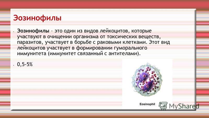 Эозинофилы Эозинофилы – это один из видов лейкоцитов, которые участвуют в очищении организма от токсических веществ, паразитов, участвует в борьбе с раковыми клетками. Этот вид лейкоцитов участвует в формировании гуморального иммунитета (иммунитет св