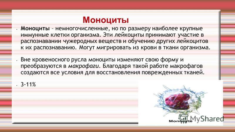 Моноциты Моноциты – немногочисленные, но по размеру наиболее крупные иммунные клетки организма. Эти лейкоциты принимают участие в распознавании чужеродных веществ и обучению других лейкоцитов к их распознаванию. Могут мигрировать из крови в ткани орг