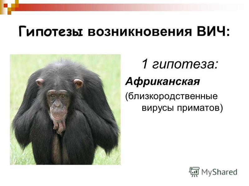 Гипотезы возникновения ВИЧ: 1 гипотеза: Африканская (близкородственные вирусы приматов)