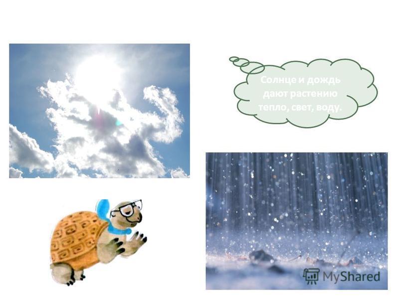 Солнце и дождь дают растению тепло, свет, воду.