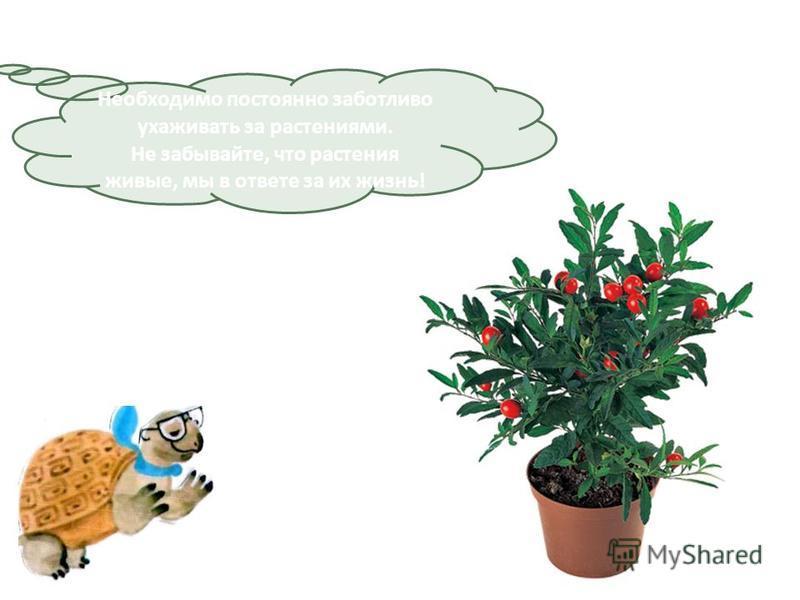 Необходимо постоянно заботливо ухаживать за растениями. Не забывайте, что растения живые, мы в ответе за их жизнь!