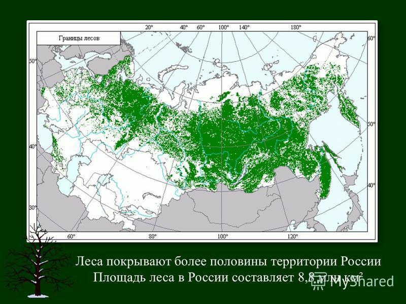 Леса покрывают более половины территории России Площадь леса в России составляет 8,8 млн км ²