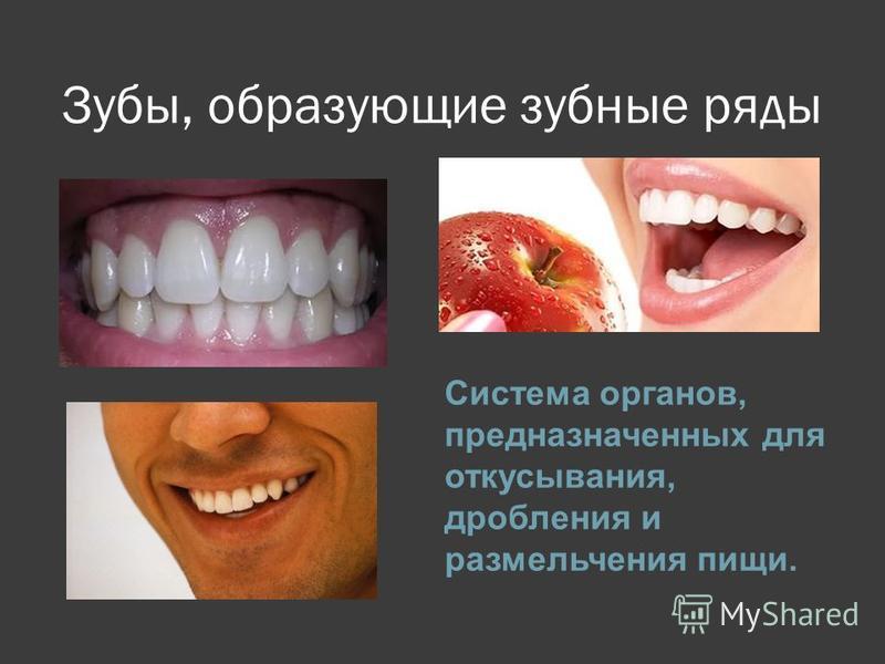 Зубы, образующие зубные ряды Система органов, предназначенных для откусывания, дробления и размельчения пищи.