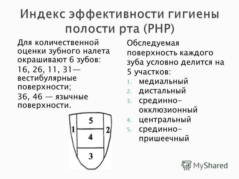 Для количественной оценки зубного налета окрашивают 6 зубов: 16, 26, 11, 31 вестибулярные поверхности; 36, 46 язычные поверхности. Обследуемая поверхность каждого зуба условно делится на 5 участков: 1. медиальный 2. дистальный 3. срединно- окклюзионн