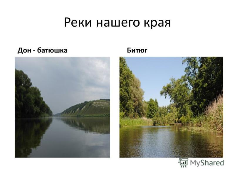 Реки нашего края Дон - батюшка Битюг