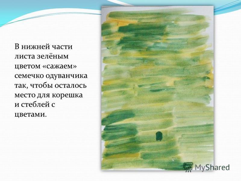 В нижней части листа зелёным цветом «сажаем» семечко одуванчика так, чтобы осталось место для корешка и стеблей с цветами.