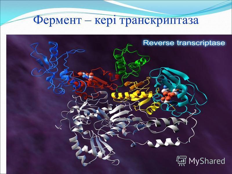 Фермент – кері транскриптаза
