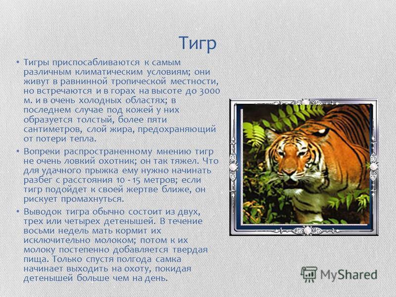 Тигр Тигры приспосабливаются к самым различным климатическим условиям; они живут в равнинной тропической местности, но встречаются и в горах на высоте до 3000 м. и в очень холодных областях; в последнем случае под кожей у них образуется толстый, боле
