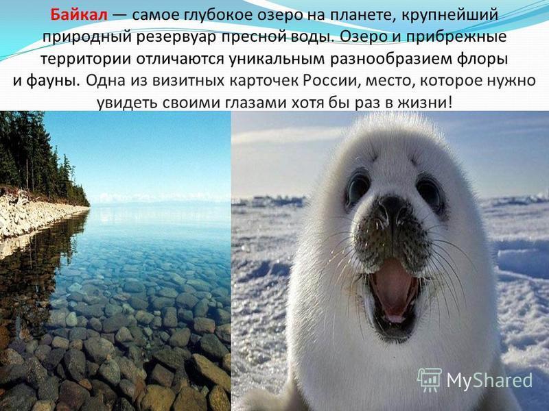 Байкал самое глубокое озеро на планете, крупнейший природный резервуар пресной воды. Озеро и прибрежные территории отличаются уникальным разнообразием флоры и фауны. Одна из визитных карточек России, место, которое нужно увидеть своими глазами хотя б