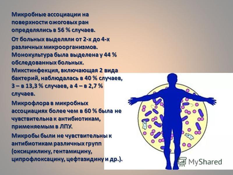 Микробные ассоциации на поверхности ожоговых ран определялись в 56 % случаев. От больных выделяли от 2-х до 4-х различных микроорганизмов. Монокультура была выделена у 44 % обследованных больных. Микстинфекция, включающая 2 вида бактерий, наблюдалась