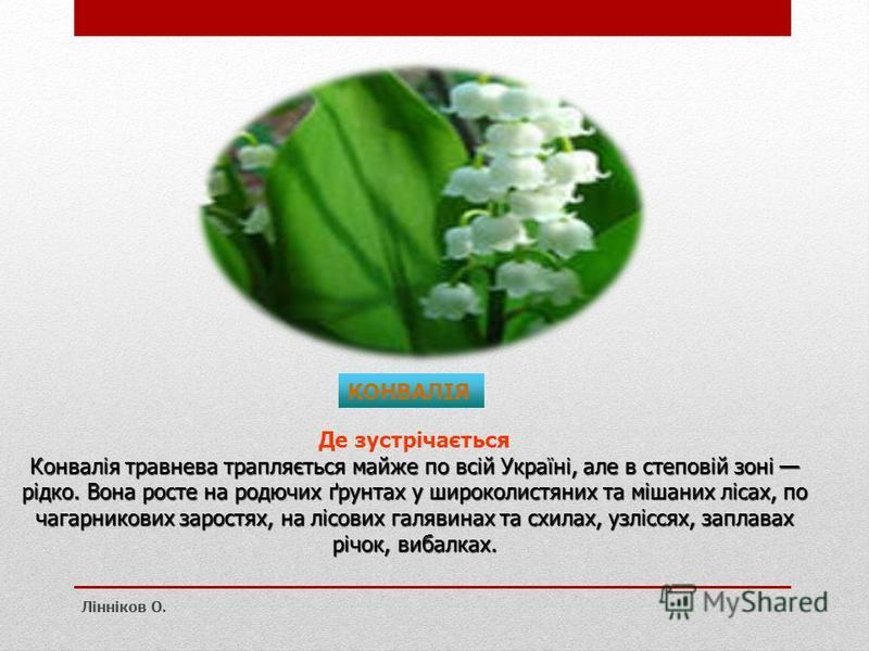 КОНВАЛІЯ Де зустрічається Конвалія травнева трапляється майже по всій Україні, але в степовій зоні рідко. Вона росте на родючих ґрунтах у широколистяних та мішаних лісах, по чагарникових заростях, на лісових галявинах та схилах, узліссях, заплавах рі
