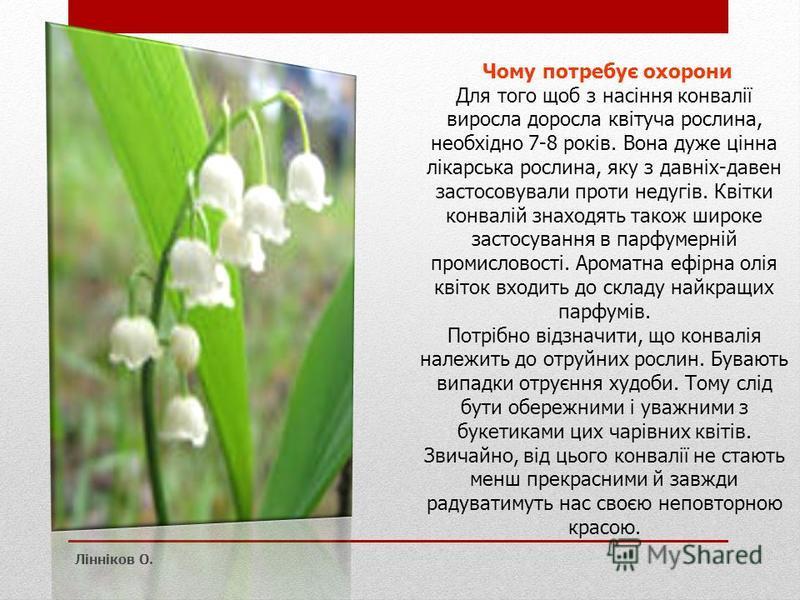 Чому потребує охорони Для того щоб з насіння конвалії виросла доросла квітуча рослина, необхідно 7-8 років. Вона дуже цінна лікарська рослина, яку з давніх-давен застосовували проти недугів. Квітки конвалій знаходять також широке застосування в парфу