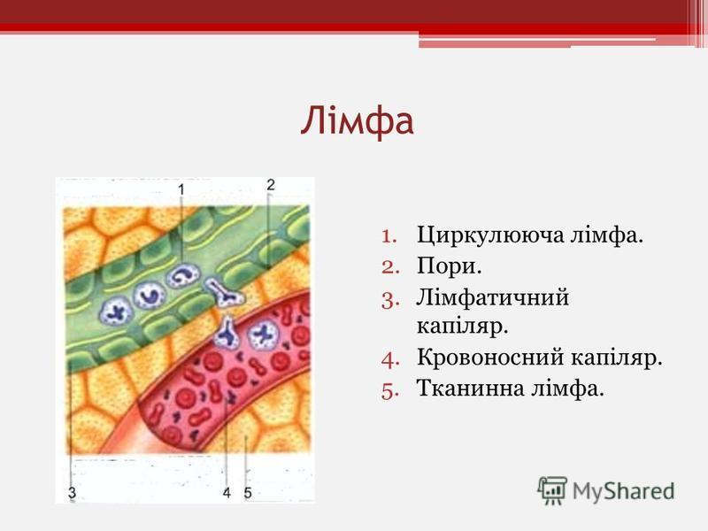 Лімфа 1.Циркулююча лімфа. 2.Пори. 3.Лімфатичний капіляр. 4.Кровоносний капіляр. 5.Тканинна лімфа.