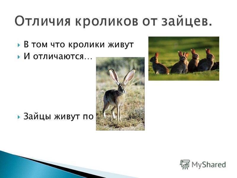 В том что кролики живут И отличаются… Зайцы живут по