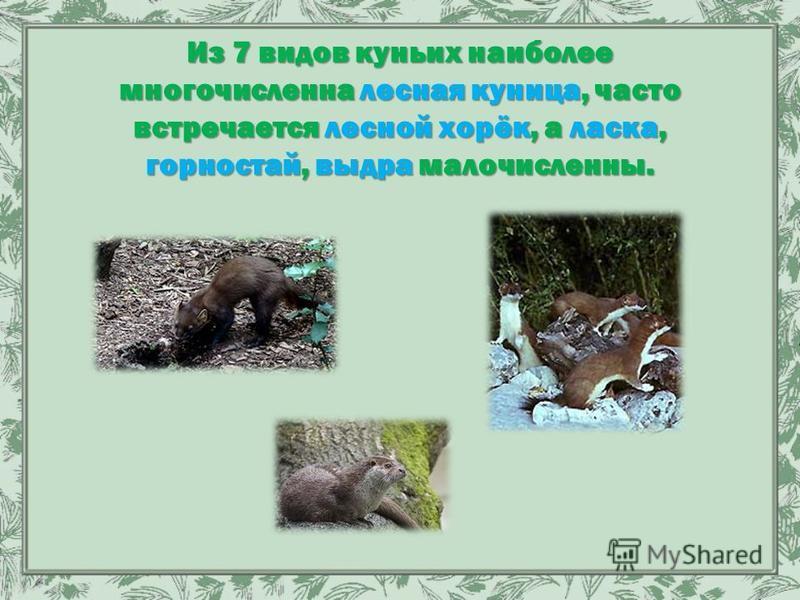 Из 7 видов куньих наиболее многочисленна лесная куница, часто встречается лесной хорёк, а ласка, горностай, выдра малочисленны.