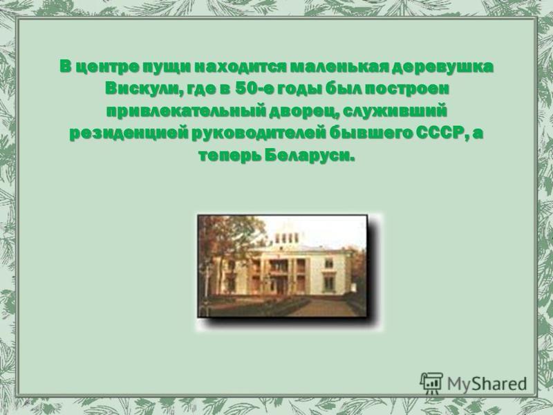 В центре пущи находится маленькая деревушка Вискули, где в 50-е годы был построен привлекательный дворец, служивший резиденцией руководителей бывшего СССР, а теперь Беларуси.