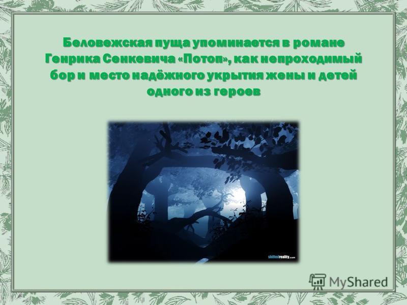 Беловежская пуща упоминается в романе Генрика Сенкевича «Потоп», как непроходимый бор и место надёжного укрытия жены и детей одного из героев