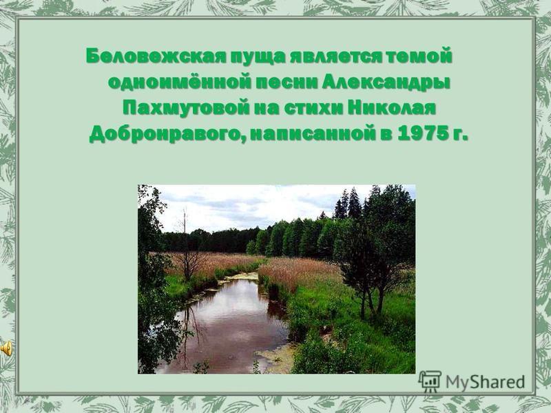 Беловежская пуща является темой одноимённой песни Александры Пахмутовой на стихи Николая Добронравого, написанной в 1975 г.