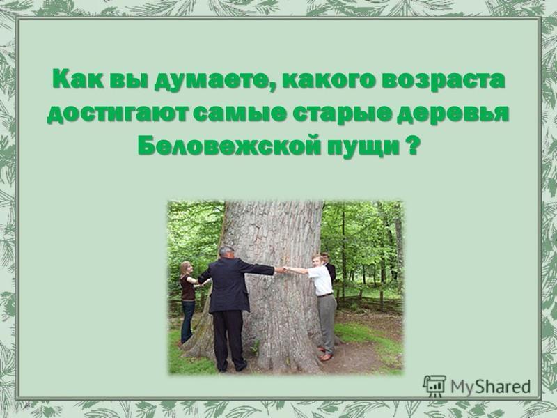Как вы думаете, какого возраста достигают самые старые деревья Беловежской пущи ?