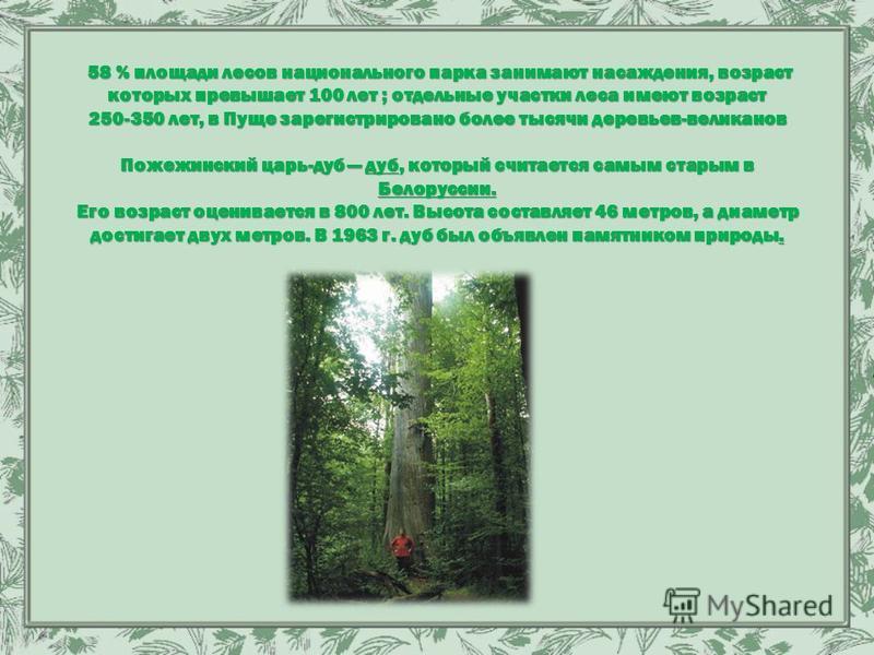 58 % площади лесов национального парка занимают насаждения, возраст которых превышает 100 лет ; отдельные участки леса имеют возраст 250-350 лет, в Пуще зарегистрировано более тысячи деревьев-великанов Пожежинский царь-дуб дуб, который считается самы