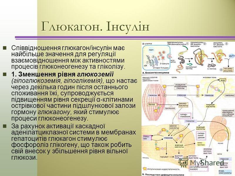 Глюкагон. Інсулін Співвідношення глюкагон/інсулін має найбільше значення для регуляції взаємовідношення між активностями процесів глюконеогенезу та гліколізу. 1. Зменшення рівня глюкоземїі (гіпоглюкоземія, гіпоглікемія), що настає через декілька годи