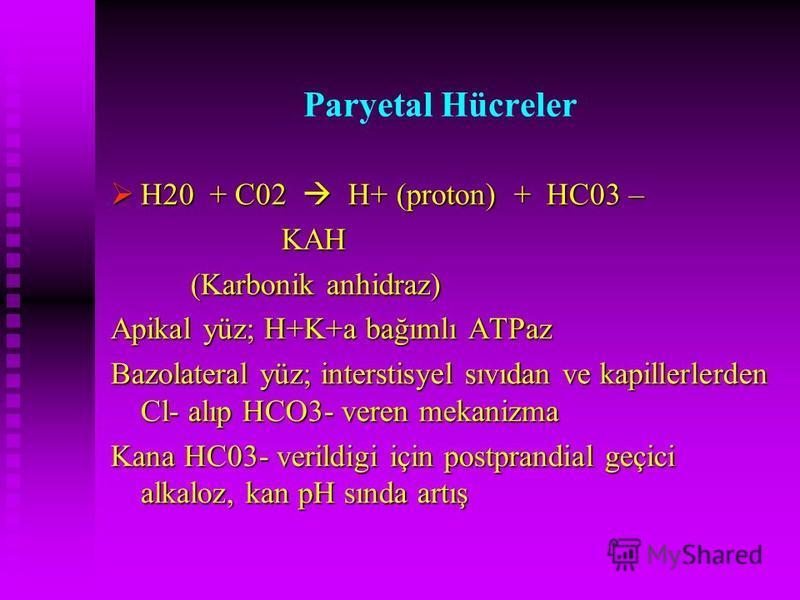Paryetal Hücreler H20 + C02 H+ (proton) + HC03 – H20 + C02 H+ (proton) + HC03 – KAH KAH (Karbonik anhidraz) Apikal yüz; H+K+a bağımlı ATPaz Bazolateral yüz; interstisyel sıvıdan ve kapillerlerden Cl- alıp HCO3- veren mekanizma Kana HC03- verildigi iç