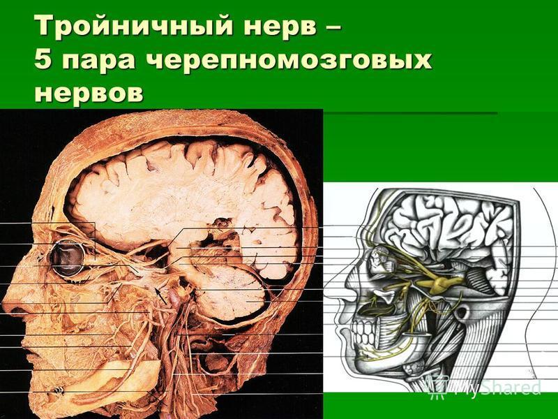 Тройничный нерв – 5 пара черепно-мозговых нервов